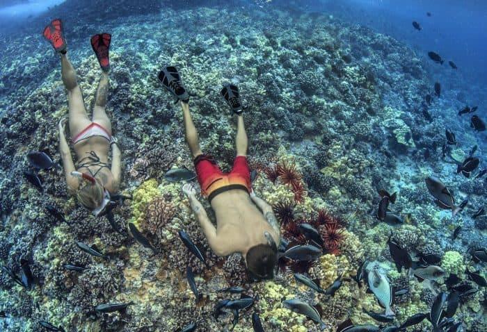 snorkel and scuba