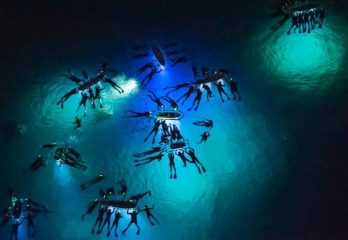 snorkeling at night
