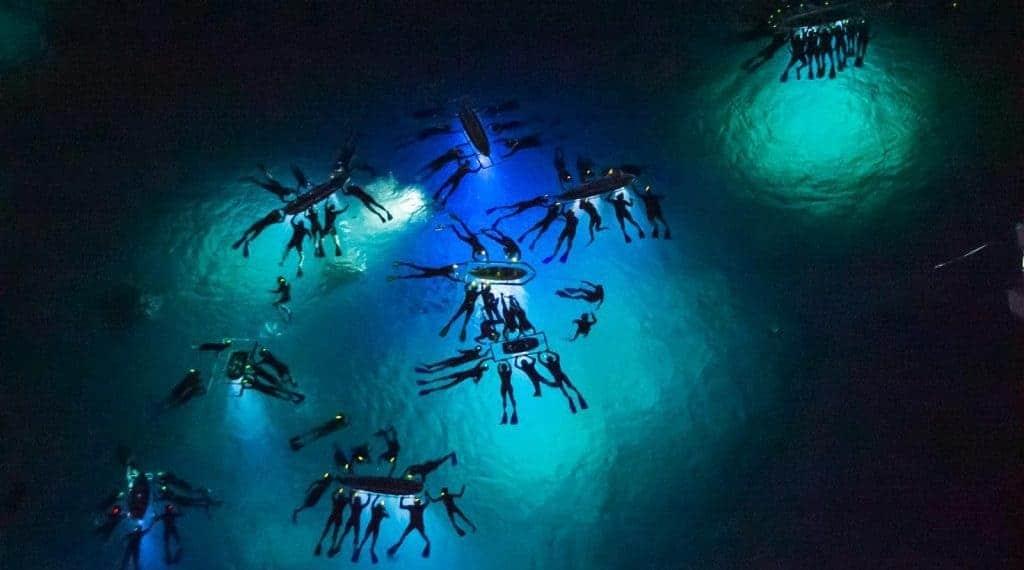 snorkeling at night