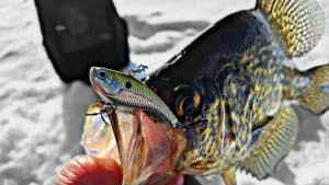 How to Catch Crappie Ice Fishing